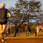 Big Five Marathon: La gran aventura en Sudáfrica