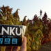 ANKU: El snack con superfoods